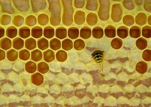 La cera de abejas es un remedio increíble