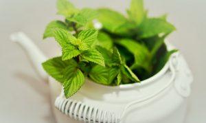 Puedes utilizar té verde fresco o en hojas secas